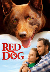Rent Red Dog on DVD