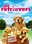 Gold Retrievers poster
