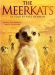 Meerkats poster